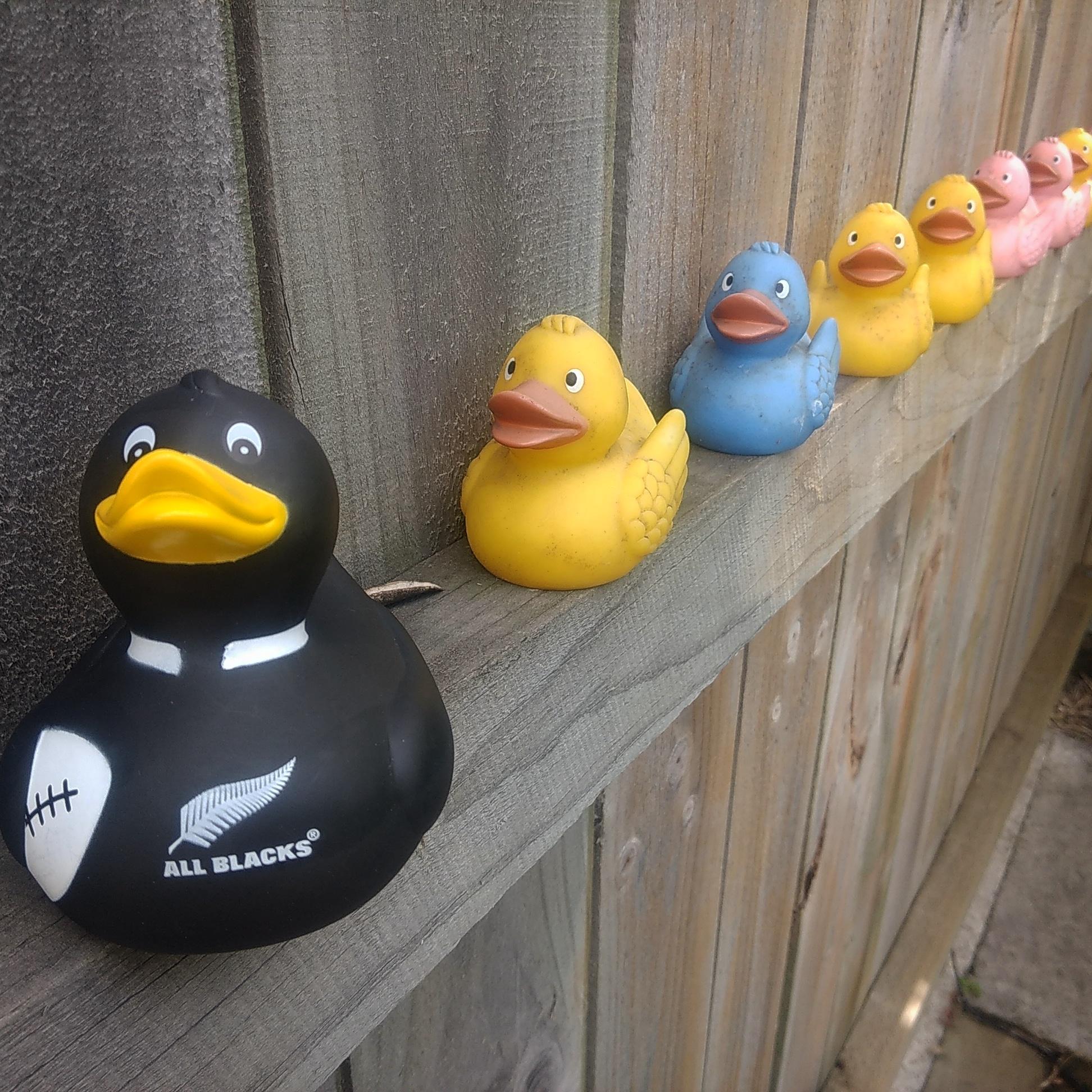 All balcks duck at Designer Garden