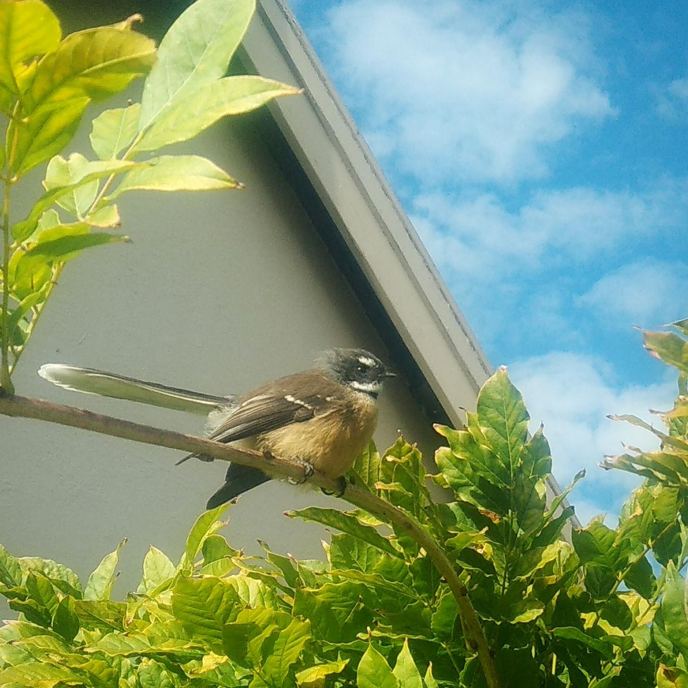 Christchurch B&B Garden Bird