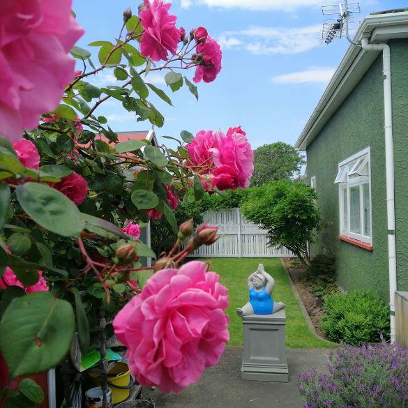 Christchurch B&B Yoga Lady Pink Rose