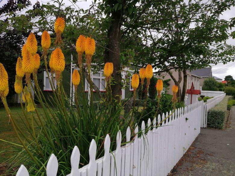 Christchurch BnB garden