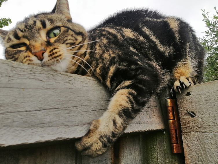 Christchurch B&B Cat Marmite on Fence