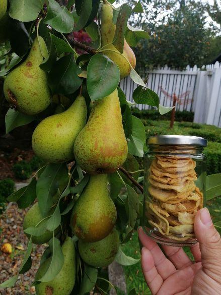 Christchurch B&B Pear Tree