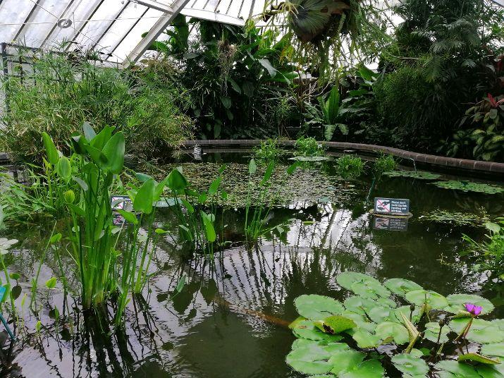 Wellington Botanical Garden
